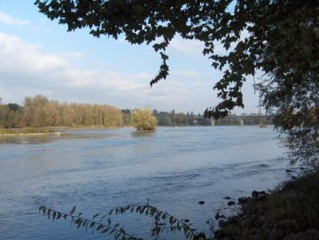 medium_Bords_de_Loire_8_nov._2006_039.jpg